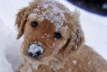 Cute Animals / by Alyson Murphy