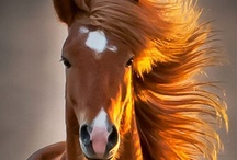 """Horse Dreams  / """"The horse, with beauty unsurpassed, strength immeasurable and grace unlike any other, still remains humble enough to carry a man upon his back."""" / by Mary 'Cribbs' Lowther"""
