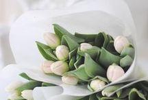 Tulips  t u l p e n
