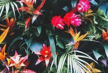 Tropical outdoor