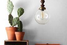 Plants/Planten / Planten in huis oubollig en saai? Absoluut niet!