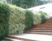Vertical gardening  v e r t i c a a l t u i n i e r e n