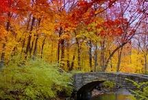 Fall!! / by Toni Clark