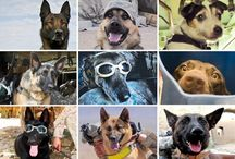MWD/Military Working Dogs / Military Working Dogs,EDD and their handlers or Retired families. Military Working Dog are MWD.  / by Judy Krubsack