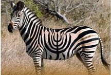 Hanukkah,Hanukah,Chanukah / happy.happy.joy.joy.mazel tov  / by creativegang