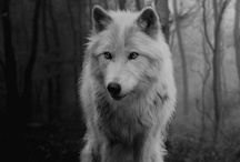 Wolves / by Zena Smith