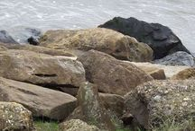 Coastal Path / Scenes from the seaside !