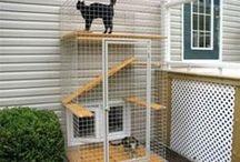 Cat Walkways