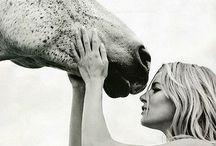 Equestrian / horses calm the soul...