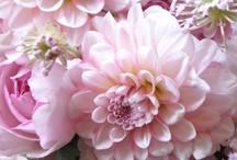flora.  / pretty flowers
