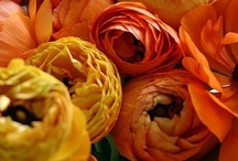 coral crush II / orange, apricot, bittersweet, cantaloupe, carrot, coral, peach, red-yellow, salmon, tangerine, titian, persimmon, mandarin / by BrendaGay