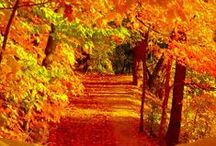 Breathtaking Fall  / by Wendy Perla