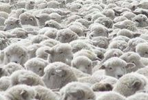 Sheep and Wool / Sheep and Wool - After all wool is what LooHoos are made of!