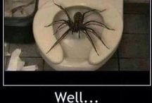 SPIDERS... / Spiders of all kinds..Safe,Deadly, Funny etc :- / by Joy Stacey-Hills