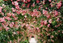 gardens + green / by Shira McDermott