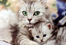 The Cat Family / The cat family in photographs / by Gayle Alstrom