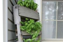 My Garden! / by Karen Ferrell