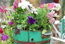 planting combos...to do now / Springtime container/window box  inspiration & combinations