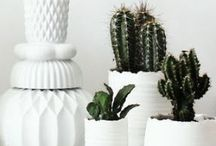 PLANTERS (obsessed) / We love how different #shapes, colors, sizes and textures can accentuate the characteristics of a #plant.   / by Paper Culture