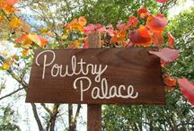 Poultry Palace / All about caring for my chicks