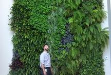 Vertical Gardens / Don't have a lot of horizontal space to expand your garden? Go vertical!