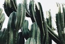 Cacti in Cali / Cactus is a Southern Californian's gardening go-to.  Here is some inspiration for your own SoCal landscape.