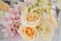 Wedding / by Ali Isley