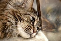 cats - the soul guardians