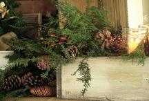 Christmas Decorating Ideas / by Laurie Bohannan