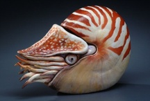 Art - Ceramics - Pottery / by Ray Harris