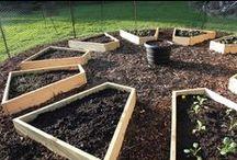 growing food & flowers
