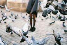 photography / by Anna Laganovska