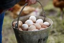 homesteading / modern homesteading tips and resources