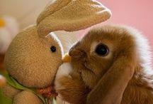 Conejitos / Conejitos. Bunnyes. Love