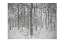 Winter scenes / Snowfall is magical isn't it - I live in Maine so I am lucky enough to experience it every winter - ahhh....