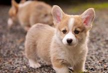 Dogs / DOGS I LOVE DOGS OWN TWO WRITE ABOUT THEM ON MY BLOG IBBYHEART