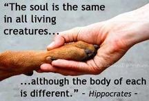 Animals / I love animal. Treat them right. Every one.
