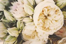 F L O W E R S / Gorgeous Flowers and arrangements I adore