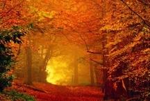 Autumn / by Beverly Pekkala