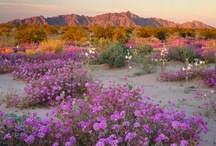 Awesome Arizona / CloudNine Marketing is located in Scottsdale, AZ and we're proud to call this awesome state our home!
