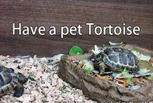 Turtles/Tortoises!!!! / by Crystal Mraz