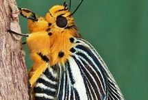 Insects / The wonderful colors of nature