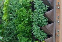 Tips n Tricks: Garden
