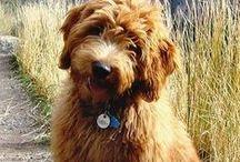 Puppy Love! / by Jordan Atkinson