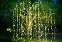 Fairy Lights are my Stars and Gardens are my Play Grounds / by Leah Bluhm