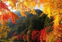 Fall colors / by Wendy Smith