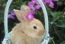 Easter Bliss! / by Rosanna Cartwright