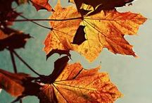 Autumn holidays & occasions
