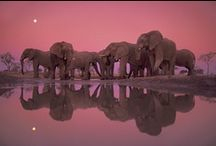 Enchanting Elephants