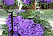 African Violets / by Melody Pelton